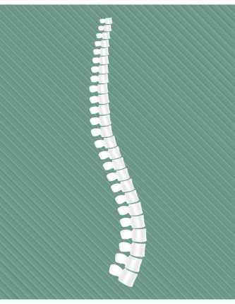 spine-01